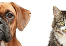 Зарубежное право допускает оставлять наследство домашним животным